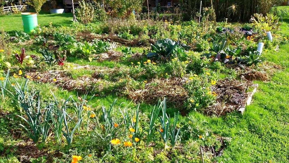 Le Jardin en Permaculture